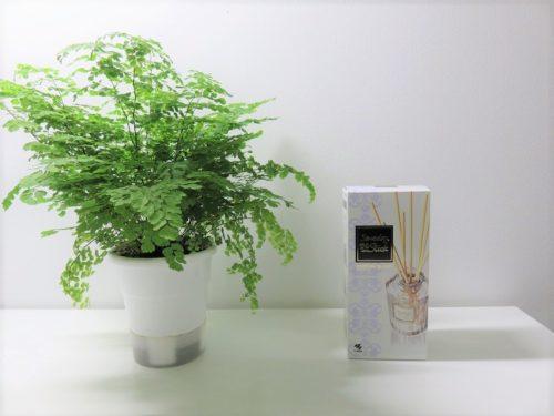 sawadya parfum blanc