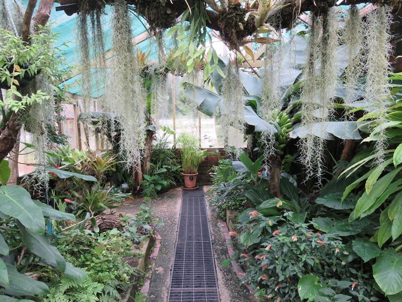 ウィンターボーン・ハウスガーデンの温室グラスハウスの内観