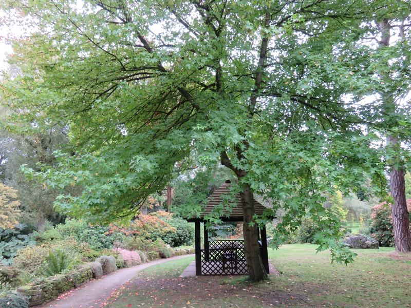ウィンターボーン・ハウスガーデンの楓