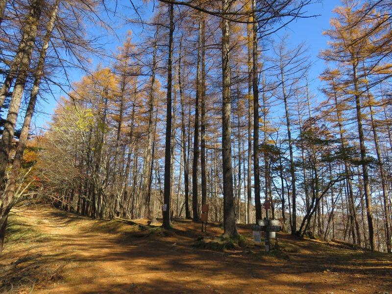 七ツ石小屋から雲取山へ(紅葉並木道)
