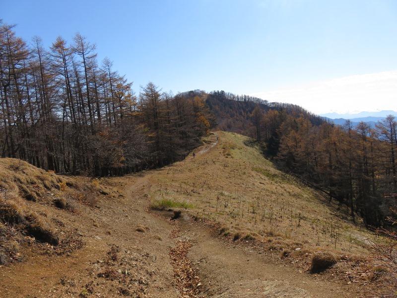 勾配のない雲取山の山道