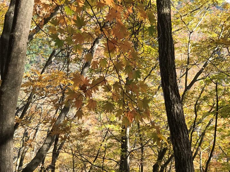 雲取山の紅葉