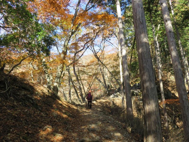 雲取山の山道と紅葉