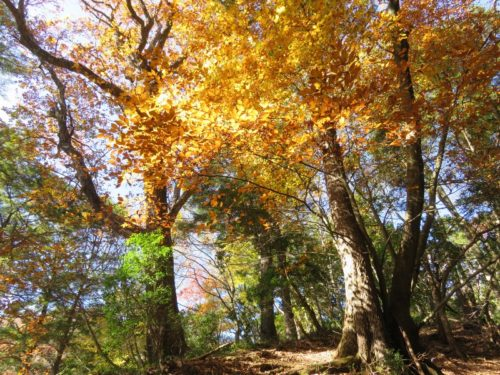 雲取山の紅葉が見ごろ