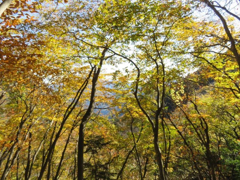 雲取山の11月の紅葉