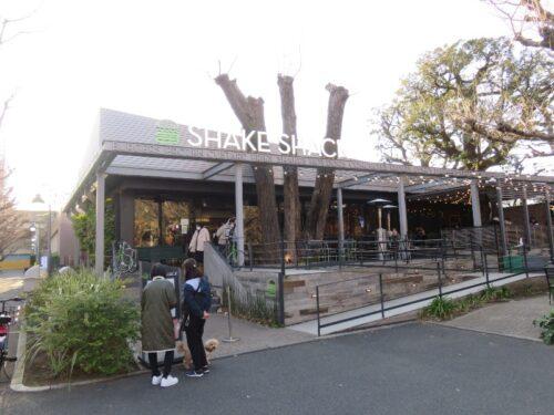 シェイクシャック 外苑いちょう並木外観