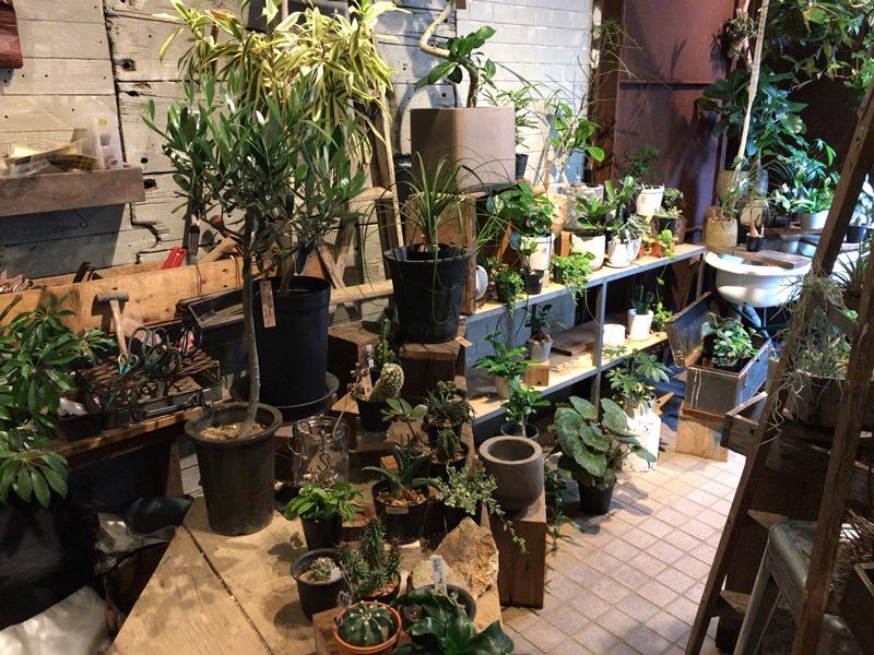 ROUTE BOOKSの観葉植物