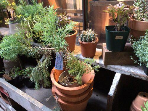 ルートブックスで植物を購入