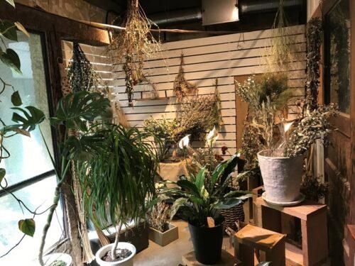 ROUTE BOOKSの植物