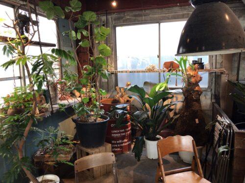 ルートブックスのアンティーク家具と亜熱帯グリーン